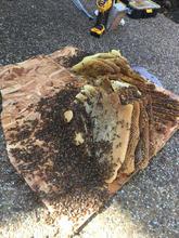 Beehive Cut Out.jpg