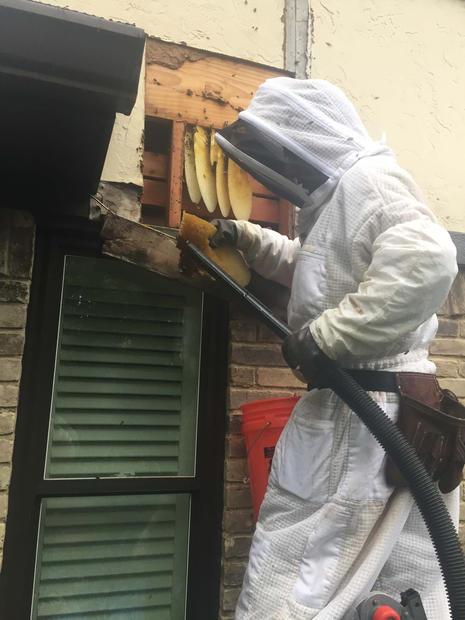 Bee Removal Dallas (1).jpg