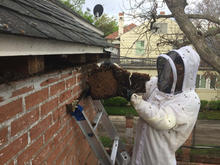 Bee Removal Professional.jpg