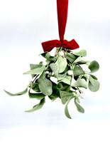 12 Inch Lambs Ear Mistletoe Ornament.jpg