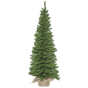Mini Pine