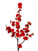 Cherry Blossom Spray.jpg