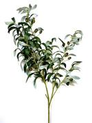 Olive Branch Spray.jpg