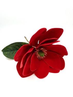 Red Magnolia Pick.jpg