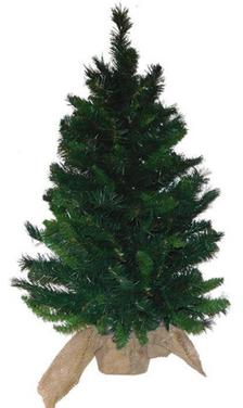 "36"" Catalia Spruce Tree"