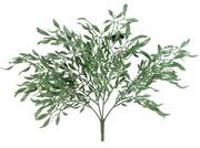 Mistletoe Bush.png