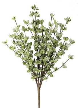 23 Inch Eucalyptus Bush.png