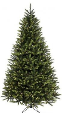 7' Kingston Spruce Tree