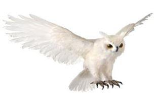 Owl - Flying 31 in..JPG
