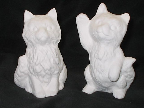 Asst. kittens