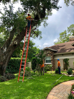 treeology_tree_ service_moss_ removal
