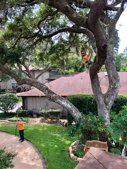 treeology_tree_ service_gutter_ cleaning