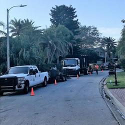 treeology tree service - fleet