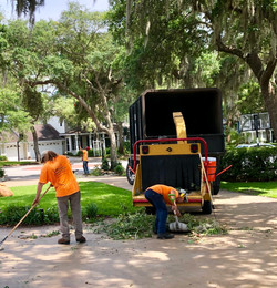 treeology_tree_ service_impecable_clean-up