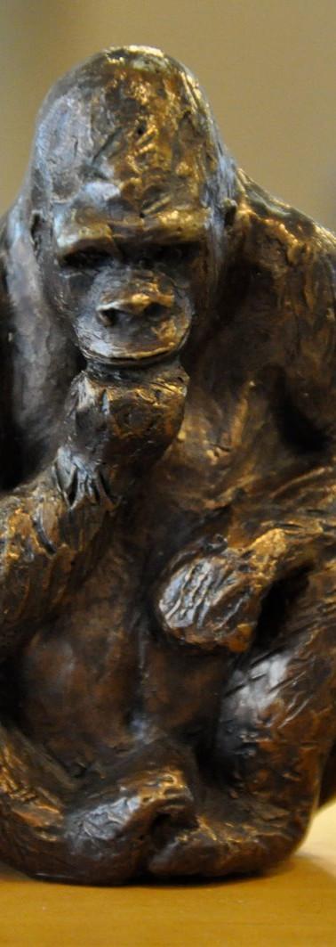 Gorilla broze