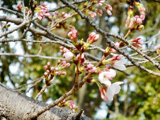 春爛漫~花の季節