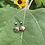 Thumbnail: Petrified Wood Prong Earrings