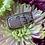 Thumbnail: Vivid Sonoran Rhyolite Ring