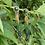 Thumbnail: Dina Fringe Earrings (Malachite)