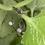 Thumbnail: Giselle Hoop Earrings