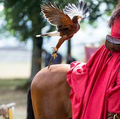 Fauconnerie de l'Hippogriffe