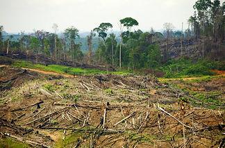 photo_013_deforestation-indonesie_rainfo