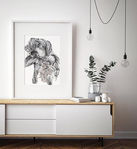 Medinilla Fine Art Print