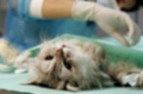 операции животных волжский