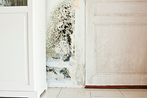 Mold Inspection.  Mold in your home.