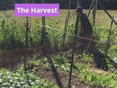 The Bountiful Harvest