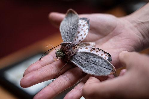 Copperdot Moth