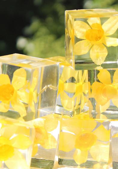 Narcis-pile.jpg