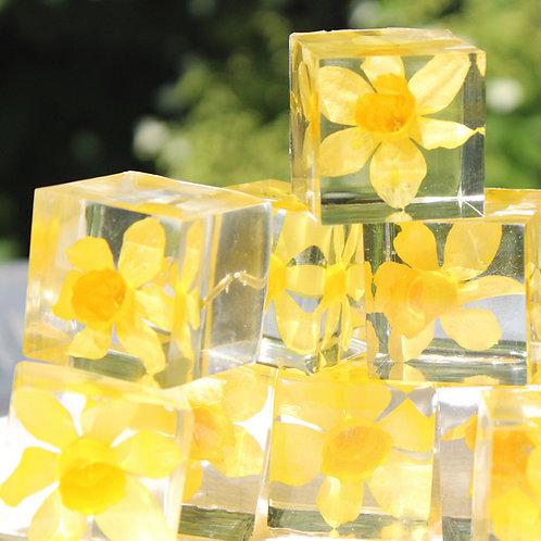 Jewel of Nature Narcis