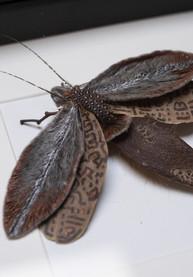 43-RUTH LAMBOO _ moth artwork
