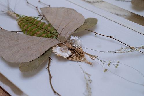 Drosophila Luffa