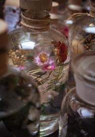 38-RUTH LAMBOO _ herbarium oil