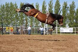 733 Alberta Sky - bay filly