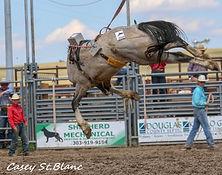 A7 Cheyenne Fringe - grey roan stallion