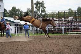 778 Holy Tobacco (Baloche) - dun stallion