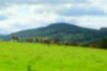 Deer Farm 07.jpg