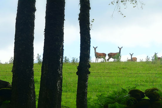 Deer Farm 05.jpg