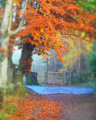 around-Crieff-18.jpg