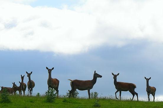 Deer Farm 06.jpg