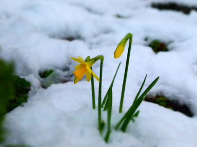 Surprise late snowfall for Crieff
