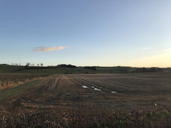 fields-02.jpg