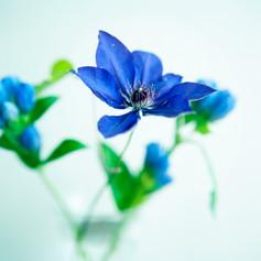 青い花とコップ.jpg