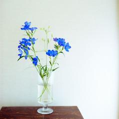 青い花01.jpg