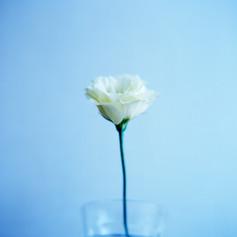 白い花と青.jpg