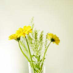 黄色いガーベラ.jpg