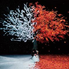 Aimer「茜さす/everlasting snow」